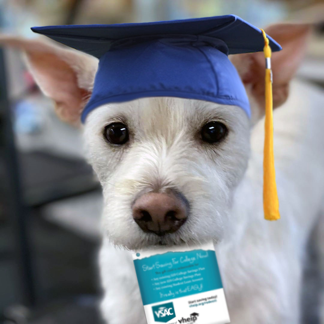 Dog in graduation cap holding VSAC Gift of College gift card